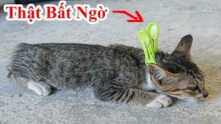 Nếu Nhà Nuôi Mèo Mà Không Biết Chiêu Này Thì Uổng Phí Cuộc Đời - Cách Biết Huyệt Của Mèo Nằm im