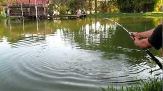 pesqueiro castelinho pirarara