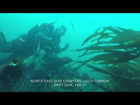 Castle Bay drift dive Feb 17