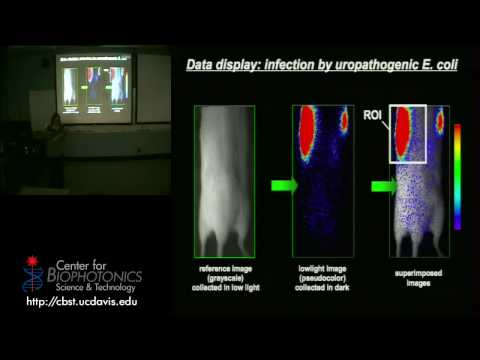 Bioluminescence, Tagging Living Organisms