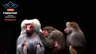 Что видят животные? Загляни в глаза обезьяне!