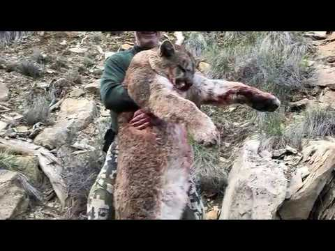 Pats Guided Mountain Lion Hunt April 2019