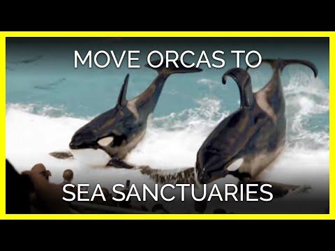 SeaWorld: Move the Orcas to Sea Sanctuaries