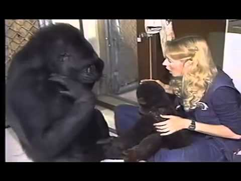 A Conversation With Koko
