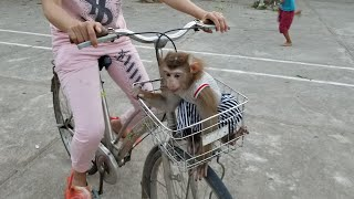 Monkey Baby Nui | Nui and her mother experience cycling