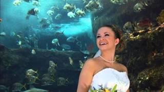 Wilmington North Carolina's Finest Wedding Reception Locations NC Aquarium at Fort Fisher