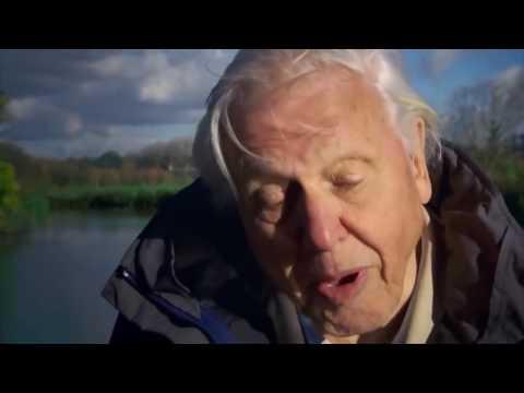 David Attenborough   Rise of Animals Triumph of the Vertebrates HD