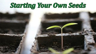Seed Starting for Beginners | Step-by-Step Guide | 15 Years of Experience