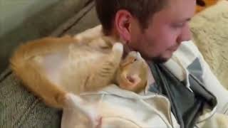 Funny Dogs and Cats Vine Compilation 2018 HD   BestVine
