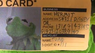 Kermits Fake Identity