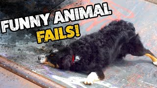 Funny Animal Fail  (2019) |Try Not To Laugh |funny pets fails