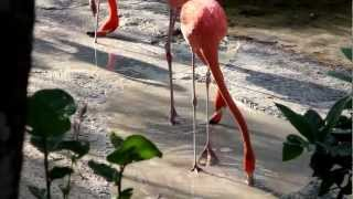 Скачать Мексика Танец фламинго