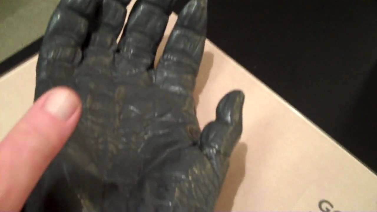 Compare Your Hand To A Gorillau0027s Hand.MP4