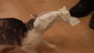 Cat gets bag stuck on head