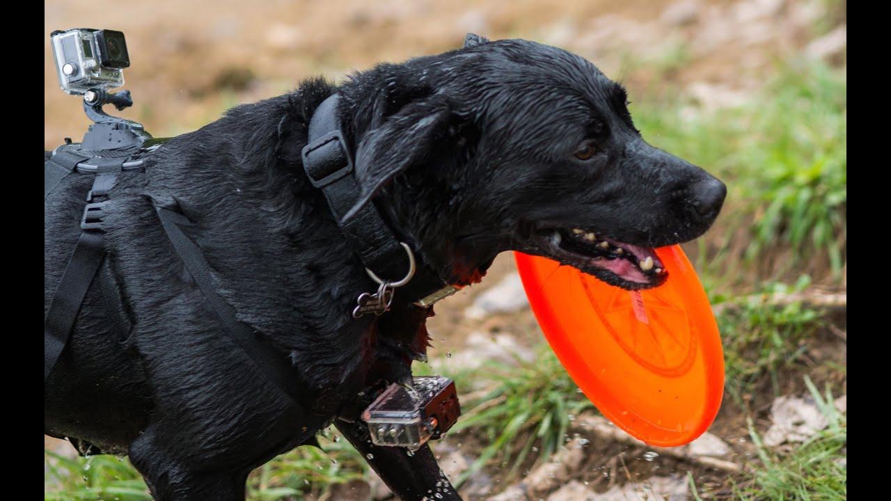 Fetch By Gopro