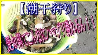 今回はマテ貝を獲りに愛知県蒲郡のラグーナビーチ(大塚海浜緑地)に行...