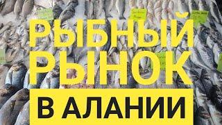 Рыбный рынок в Алании, большой выбор рыбы, кальмаров, рыбные рестораны в Алании