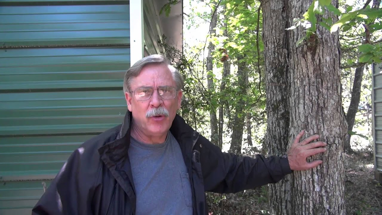 Tree Care The Woodlands Tx Doctor Master Hughes