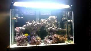 29 Gallon Salt Water Fish Tank Update #7