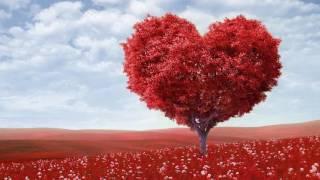 หัวใจมีปีก แจ้ ดนุพล