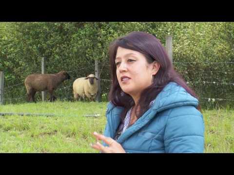 Ventajas de criar ovejas hampshire | La Finca de Hoy