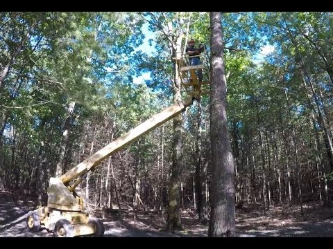 Cutting Down A Tree Using A Boom Lift