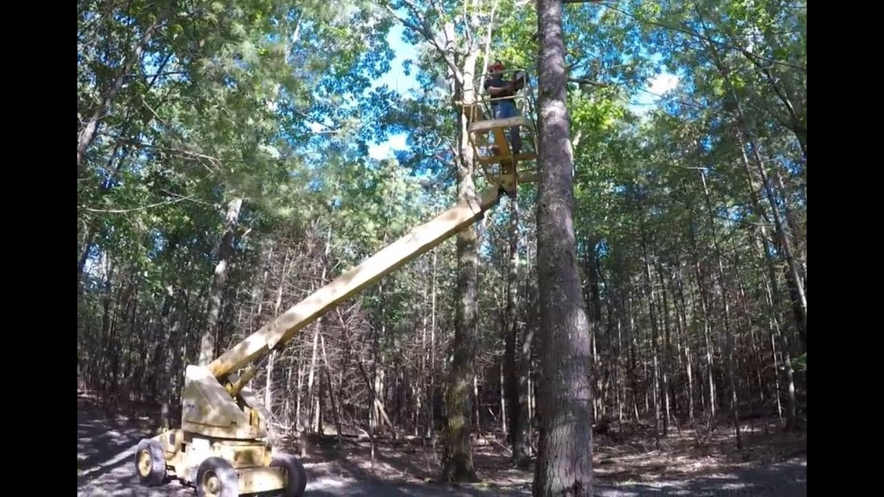Cutting Down A Tree Using A Boom Lift Youtube