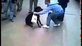 кот чуть не съел собаку