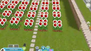 Sims FreePlay. So many Bell peppers