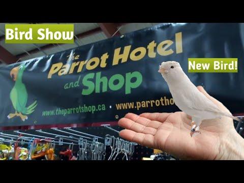 Canadian National Bird Show & Expo 2017 | Shopping | Bird Sales | New Bird!