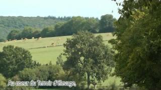 Boeuf Grandeur Nature Label Rouge : l'élevage