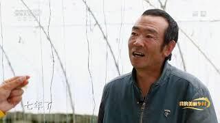 《我的美丽乡村》 20201221 清泉果香飘千里|CCTV农业 - YouTube