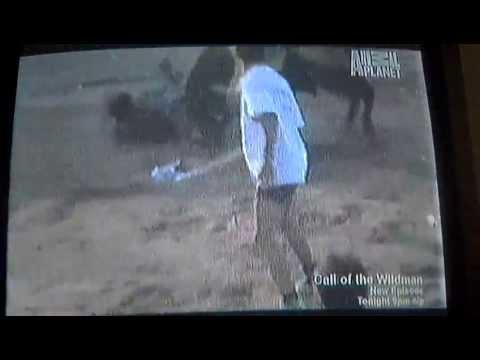 Bull vs. Bull Terrier! And the winner is....