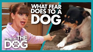 Dog's Extreme Fear Reaction Causes Owners Frequent Trouble | It's Me or The Dog