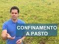 Download Lagu Como fazer confinamento a pasto - Boi Saúde Mp3