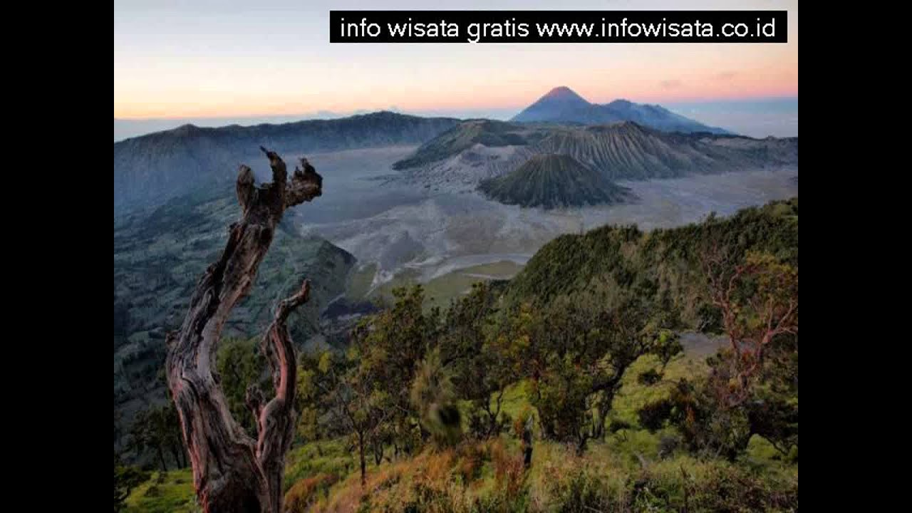 Harga Tiket Masuk Wisata Hutan Mangrove Surabaya Youtube