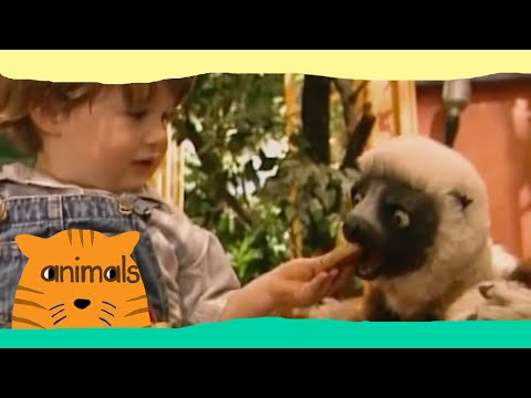 Zoboomafoo first episode