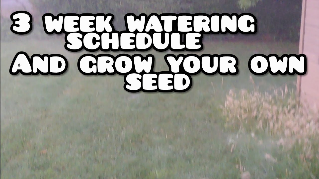 My 3 Week Water Schedule Grow Your Own Seed