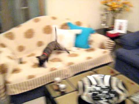 Το  σκυλακι   η  ΛΙΖΑ  τρεχει στους  καναπεδες !!!      18-9-2011