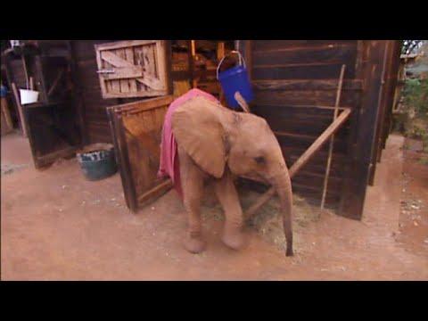 Dame Daphne Sheldrick's elephant orphanage