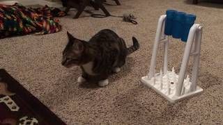 Review: Amazon's Trixie Mad Scientist Toy for Cats!