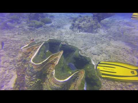 Diving palau september 2016