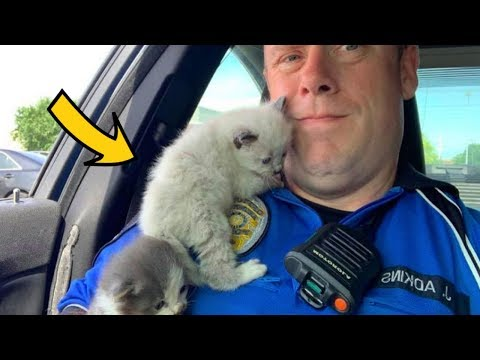 Heather Burnside - Paw Purr Azzi CUTE ALERT: Police Officer Saves Two Kittens