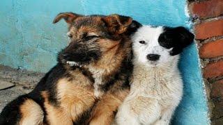 Отлов бродячих собак. Новости. Gubernia TV
