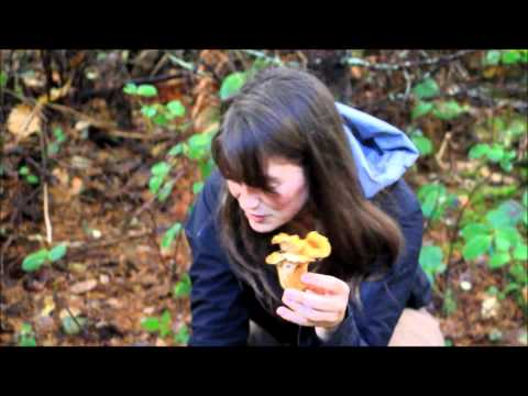 Chanterelle Mushroom Hunting In Oregon Outside Of Portland We Find The Fungus