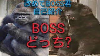 700人突破したので、改めてBOSS君の自己紹介をします(^^) これからもボ...