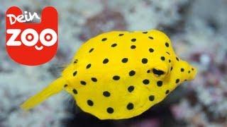Die 5 komischsten Fische (feat. Top Zehn)