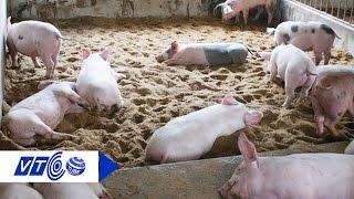 Thăm trại lợn hữu cơ tiêu chuẩn Nhật Bản | VTC