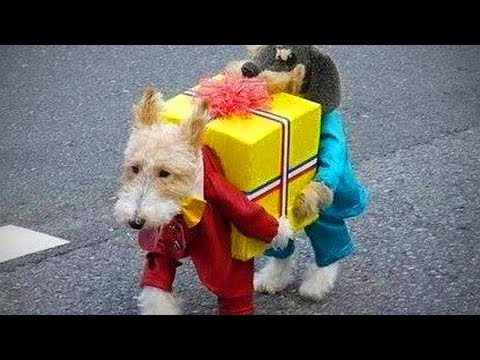 Lovely-Pets-🐱🐶-Cute-Cats-And-Dogs-In-Costumes-Full-Epic-Life