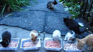 Cats and kittens after the rain on the street eat food